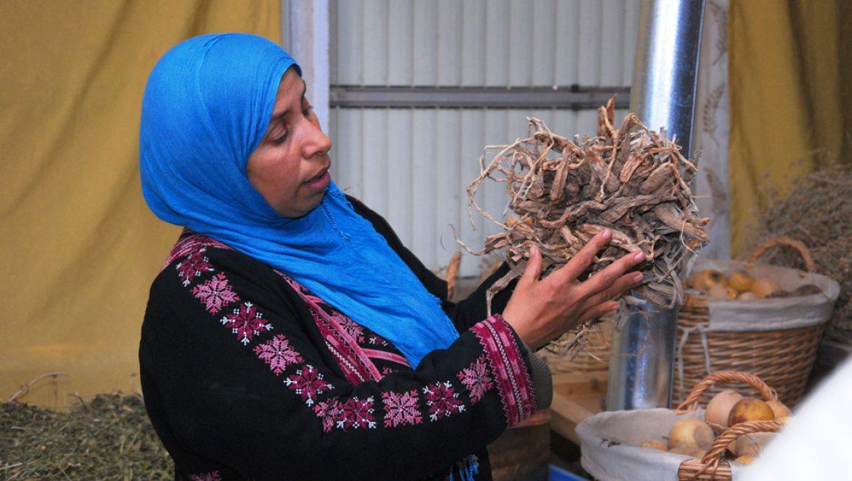 אצל בת המדבר בתל שבע-קוסמטיקה טבעונית מצמחי מדבר צילום-ענת רסקין
