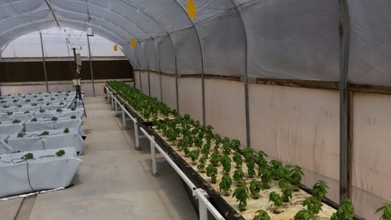 Aquaculture – חקלאות על בסיס מים בערבה