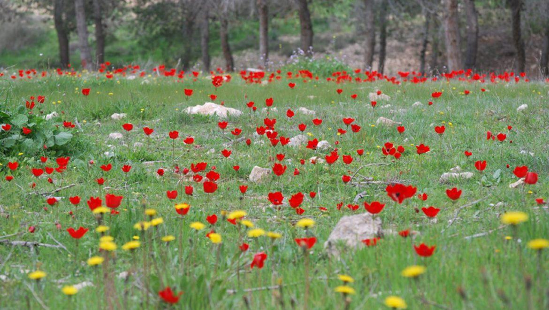 דרום אדום גם בנגב המזרחי צילום-ענת רסקין