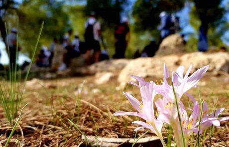 """שישי 4/12  סיורים מודרכים חינמיים לפריחה ביער להב, לאגם ירוחם ובב""""ש העתיקה"""