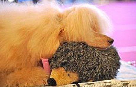תערוכת הכלבים הבינלאומית בערד