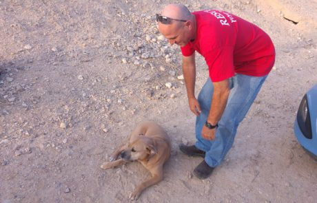 שוב- חילוץ כלב של מטיילים מהשטח