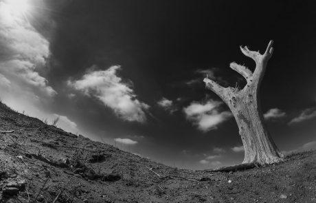 """תחרות הצילום """"הסביבה בעין העדשה"""" – פסטיבל אקולנוע במדבר"""