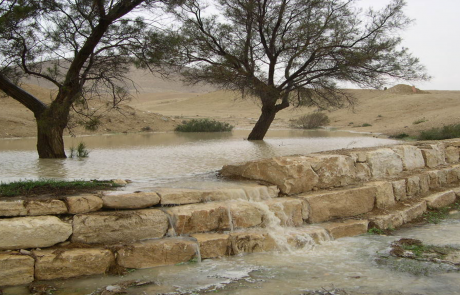 """יום המידבור 2015- פעולות שיקומיות של קק""""ל במלחמה בתהליכי התפשטות המדבר בנגב"""