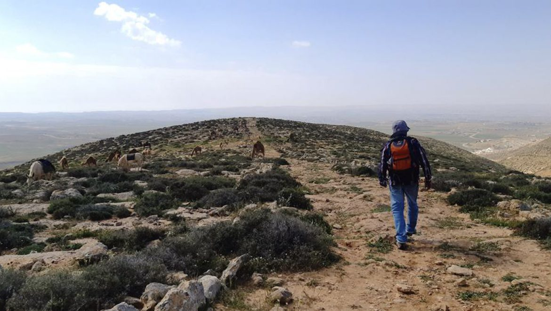 עדר גמלים בשביל ישראל-דרך המדרגות הרומיות צילום-ענת רסקין