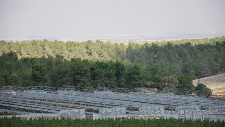 יער יתיר צילום-ענת רסקין