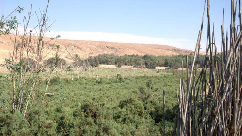 פארק ואגם ירוחם הפכו למרכז צפרות צילום-ענת רסקין