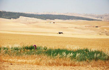 תקועים: נעצר שיווק הקרקעות בישוב כרמית