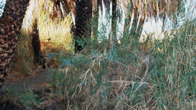 מעיין פלוטית-המעיין הנסתר צילום-ענת רסקין