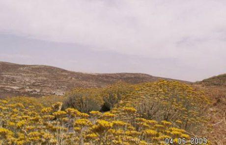 צמחי מרפא- עשבי קדם – מושב כרמל חבל יתיר