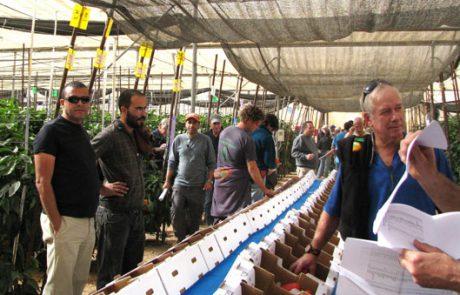 """לקראת תערוכת החקלאות הגדולה בט""""ו בשבט – 65 זני פלפל חדשים נחשפו בתחנת יאיר – מו""""פ ערבה תיכונה וצפונית, בחצבה"""