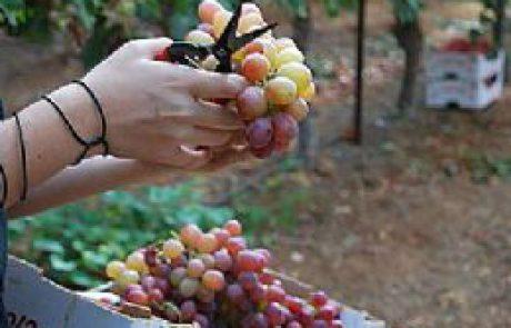 חבל יתיר – איך המרגש? תפוח בדבש