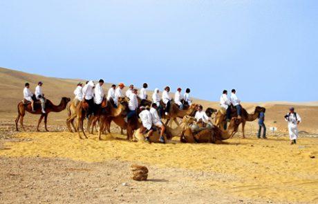 כפר הנוקדים רכיבה על גמלים
