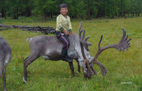 בין מונגוליה לכפר רחמה- מסע אתנו-גרפי להבנה וצילום של התרבות המונגולית