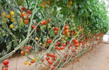 חלון למחקר והפיתוח החקלאי בערבה – סיור בתחנת יאיר למשפחות ונופשים