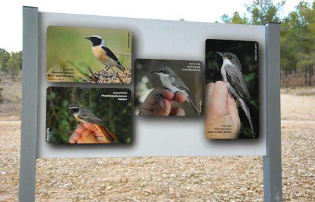 לצפות בציפורי שיר ועופות דורסים ביער להב