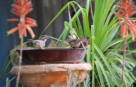 צימרים בדרום-להנות כמו ציפור חופשיה בערד