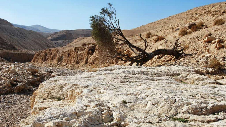 בדרך אל מאגורת כידוד בנחל יעלים צילום-ענת רסקין