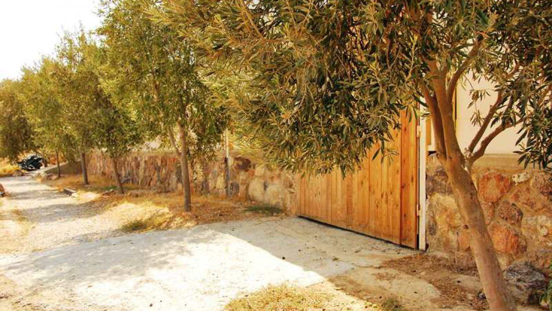 עצי זית לזכר 6 מיליון יהודים שנספו בשואה צילום-ענת רסקין
