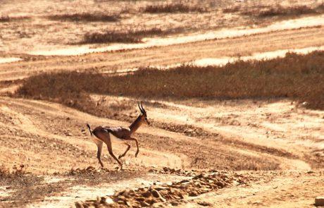 מבחן הגבריות- צבי ארץ ישראלי מול מטוס ה-F16 בבסיס נבטים שבנגב