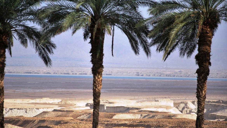 דקלים וים המלח צילום-ענת רסקין