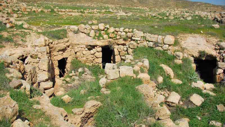 גביעונית ערבית בתל קריות צילום-ענת רסקין