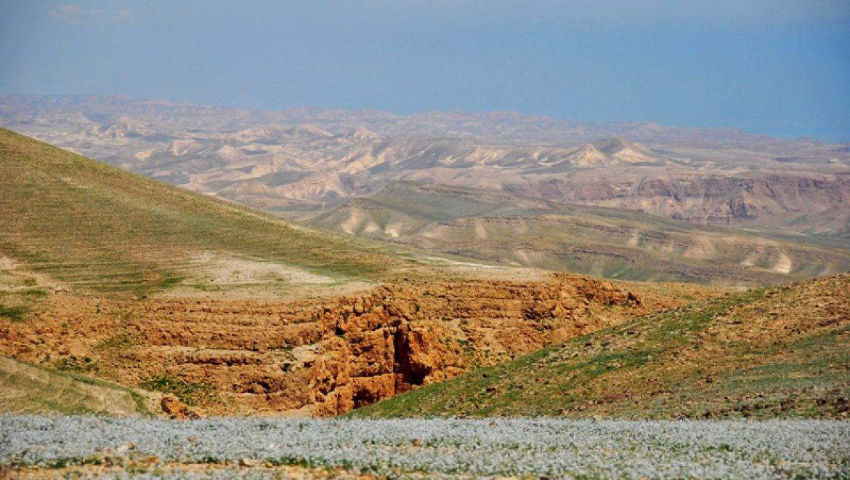 הגבעות המזרחיות של ערד צילום-ענת רסקין