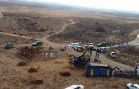 עשרות גמלים הוחרמו מ'עדר המוות'