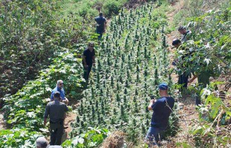 מאות שתילי קנאביס בפזורה הבדואית באזור ערד