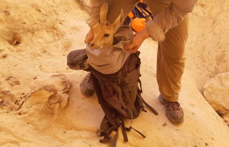 יחידת חילוץ ערבה חילצה משפחה מגב בנחל ורדית